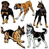 Set with dog breeds
