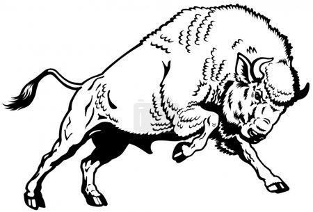 Illustration pour Bison européen avisé, pose attaquante, vue latérale en noir et blanc - image libre de droit