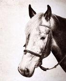 Artwork in retro style, horse, portrait