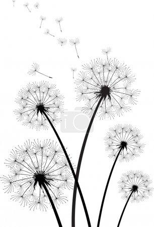 vector dandelions