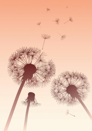 Vector dandelions in sepia with flying seeds