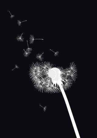 Black and white vector dandelion