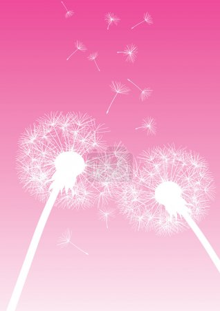 Vector dandelions on pink background