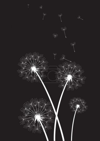 Group of white dandelions on black background