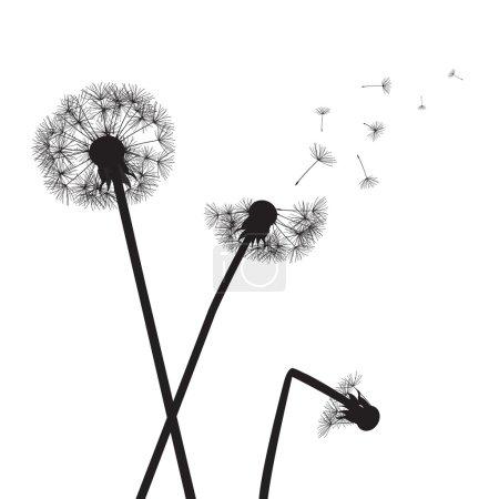 Black vector dandelions on white