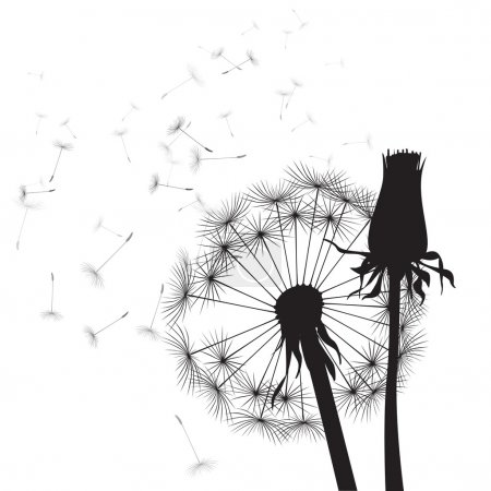 Black and white vector dandelions