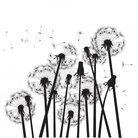 Group of black dandelions on white background
