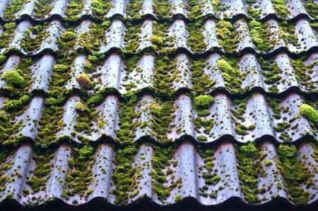 Photo pour Toit d'ardoise est recouvert de mousse verte - image libre de droit