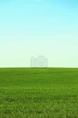 Photo pour Champ vert - image libre de droit