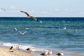 "Постер, картина, фотообои ""Чайки летит над морем"""