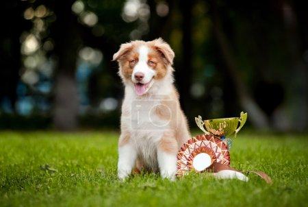 Photo pour Petit chiot et sa coupe de prix sur l'herbe - image libre de droit