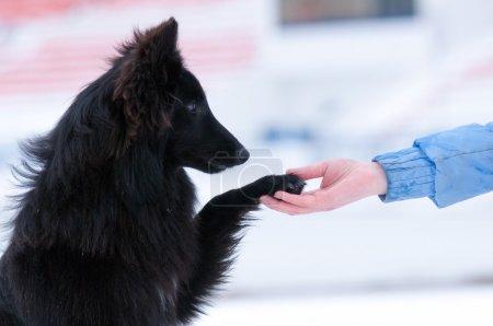 Young black dog training