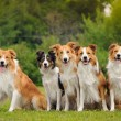 Group of five happy dogs border collie sitting on ...