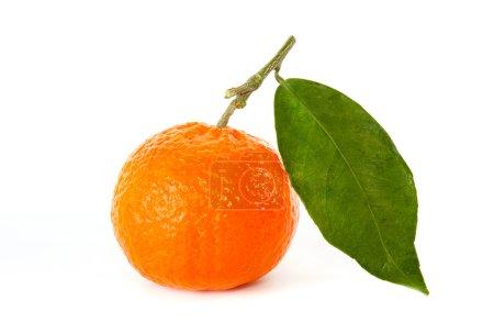 Mandarine mit Stiel und Blatt