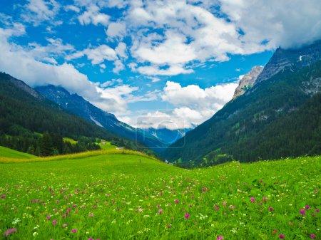 Photo pour Un champ de fleurs florissantes dans les Alpes - image libre de droit