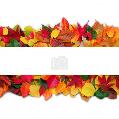 Photo for Decorative autumn image with copy space for your text - Royalty Free Image