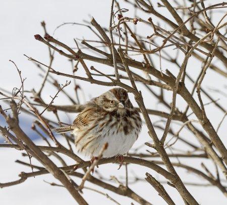 Aves acurrucadas en el árbol