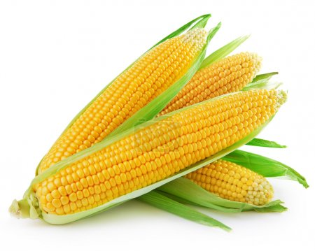 An ear of corn isolated on a white backgroun...