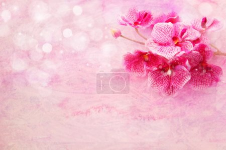 cute soft pink orchids