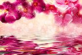 Okouzlující fialová a růžová orchideje nad vodou