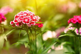Cute garden flowers at sunset time