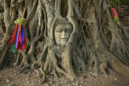 Wat Mahathat Buddha head in tree, Ayutthaya