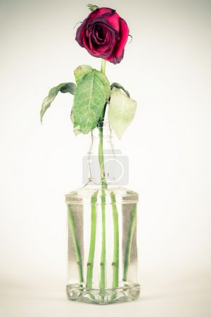 bottle with a wilted rose