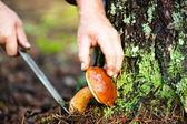 Man cuts a mushroom