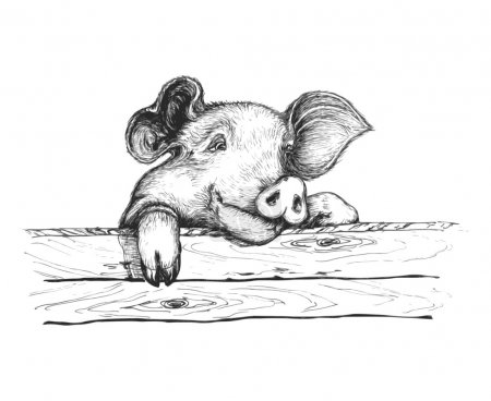 Sly pig