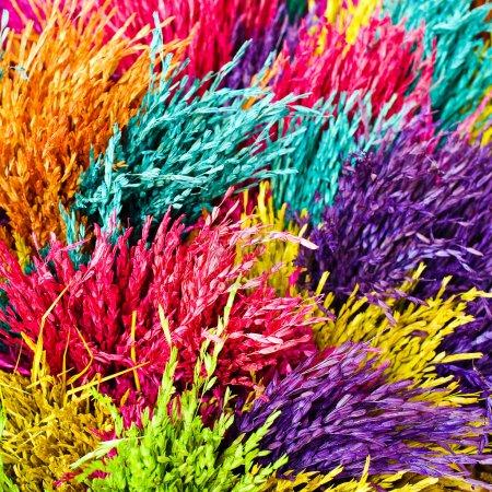 Photo pour L'herbe sèche est teinte en différentes couleurs . - image libre de droit