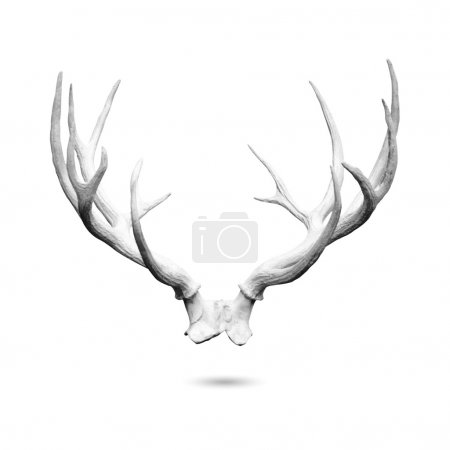 Antler isolated