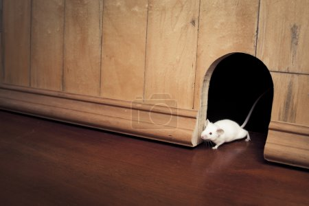 a mouse coming out of it's hole