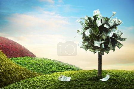 Photo pour Photo de l'arbre en dollars - image libre de droit