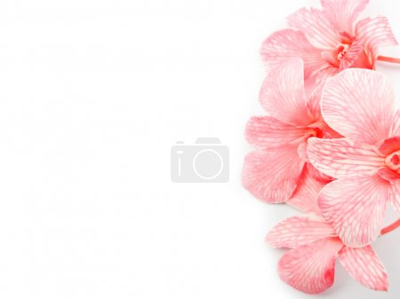 Photo for Pink orchids over white background - Royalty Free Image