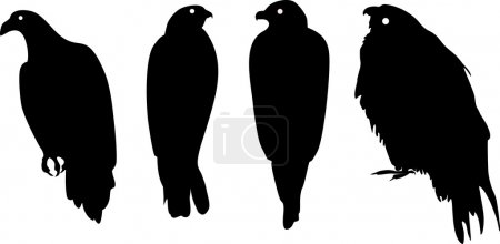 Silhouettes of different birds of prey