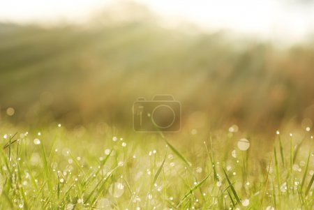 grass in dew with blurred trees in bokeh
