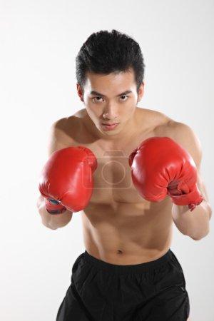 Portrait of male boxer