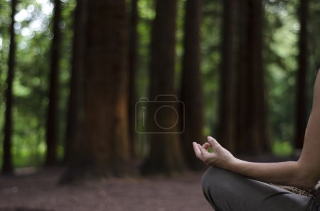 Meditating in a Pine Forest