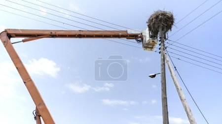 Catching storks from their nest