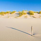"""Постер, картина, фотообои """"Дюна на пляж на закате"""""""