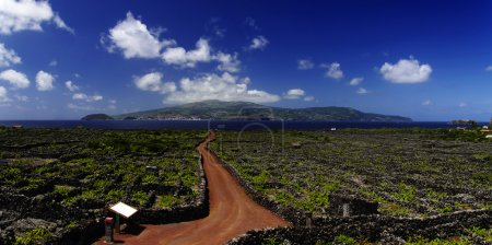 Red trail among Vineyard,Azores, Portugal