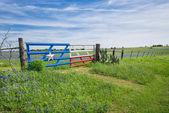 """Постер, картина, фотообои """"Техас bluebonnet поле и забор весной"""""""