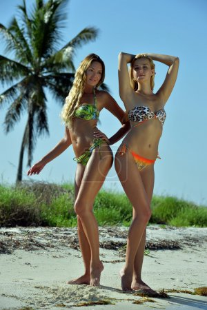 Two bikini models posing sexy in front of palm tree
