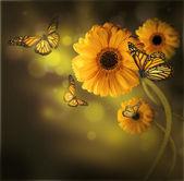 Květinové pozadí, gerbery v paprscích světla a motýl