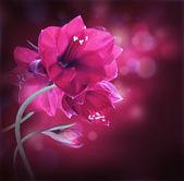 červené květy, kytice gerber
