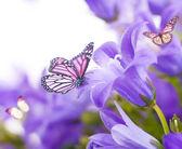 Květy na bílém pozadí, tmavě modrá ruka zvony a motýl