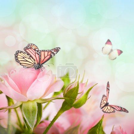 Photo pour Belles roses et papillon, fleur, le décor floral - image libre de droit