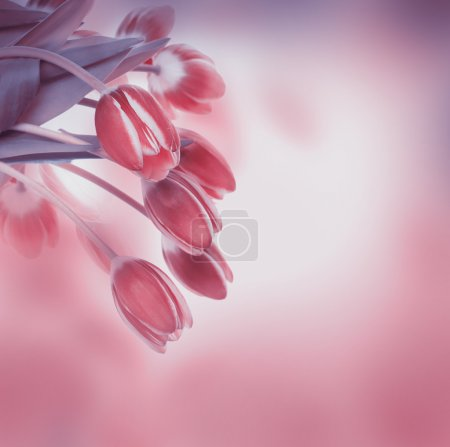 Tulips floral background
