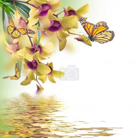 Foto de Fondo floral de orquídeas tropicales y mariposa - Imagen libre de derechos