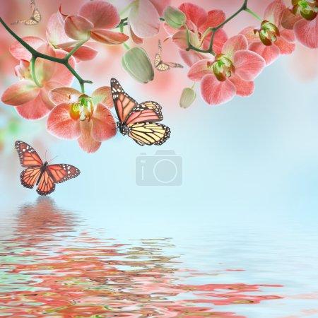 Photo pour Fond floral d'orchidées tropicales et de papillons - image libre de droit